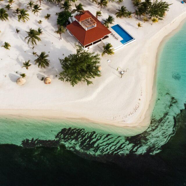 The Black Coral at Manta Island, Belize