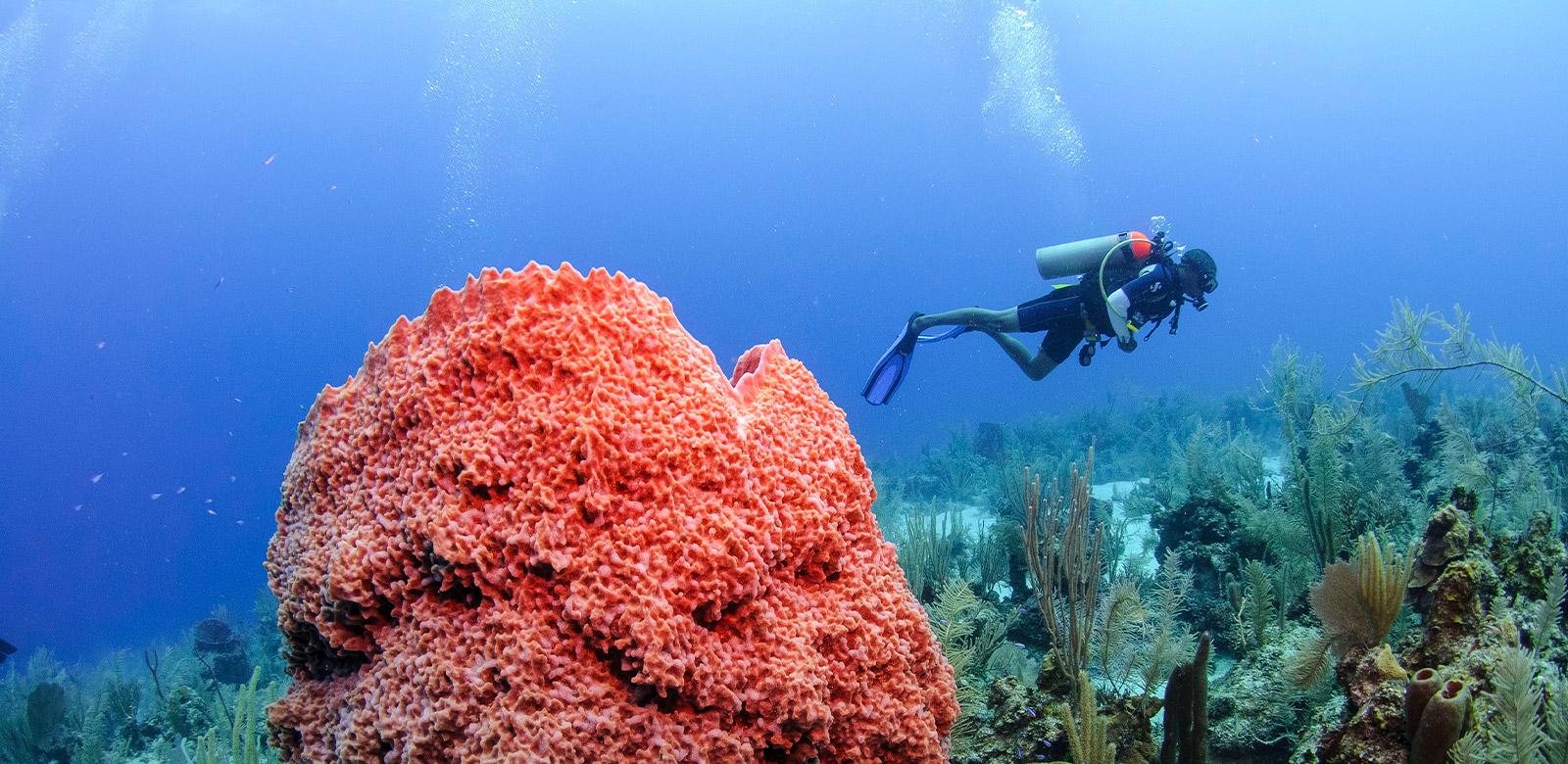 belize scuba diving certifications